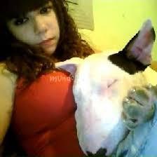 xDD - Foros de Bull Terrier - mundoAnimalia.com - 1294922385_IMG1