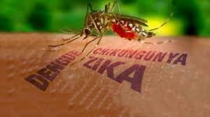 Resultado de imagem para aedes aegypti mosquito