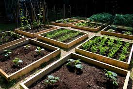 Small Picture raised vegetable gardens can be any height you want garden
