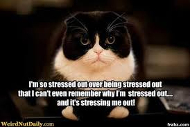 So Stressed Cat Meme Generator - Captionator Caption Generator - Frabz via Relatably.com
