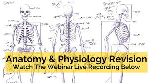 level 3 anatomy revision archives parallel coaching uk s 1 anatomy and physiology revision questions and answers
