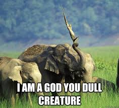 I am a god you dull creature - I am a God - quickmeme via Relatably.com
