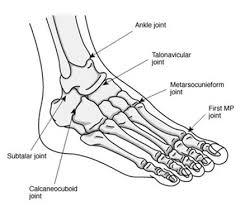 nras   national rheumatoid arthritis societyfoot diagram
