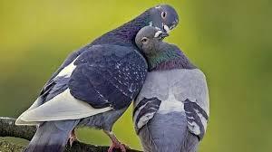Resultado de imagen para las palomas