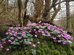 Image result for گلهای زیبای جنگلی