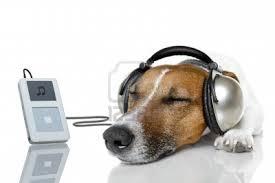 Τι μπορεί να βοηθήσει ένα υπερκινητικό σκύλο ;