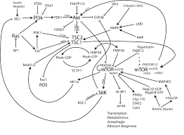 breast cancer dr robert a nagourney rational therapeutics blog mtor pathway ger