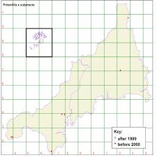 Flora of Cornwall text for Potentilla x suberecta
