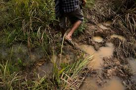 photo essay frustrated humans face off hungry elephants a man steps over puddles in earth pitted by elephant feet near a community in the kaeng hang meao district of chanthaburi province in eastern thailand