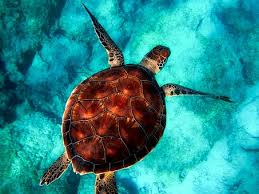 300+ Free <b>Sea Turtle</b> & Turtle Images - Pixabay