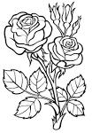 Картинки раскраски цветочки