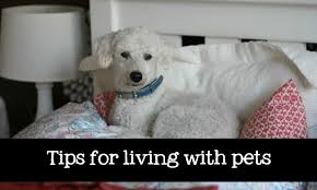 Image result for living with pets