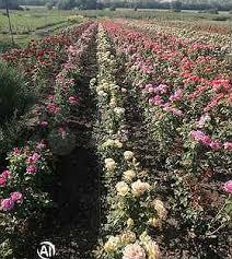 Купить растения в Красном: <b>цветы</b>, саженцы, рассада ...