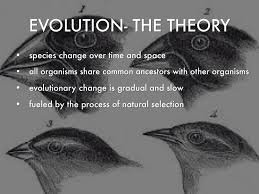 Image result for evolution theory