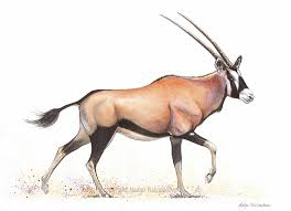 Image result for oryx