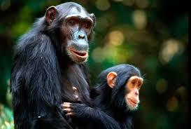 Afbeeldingsresultaat voor apen handen en voeten