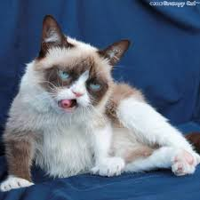 grumpy cat Blank Template - Imgflip via Relatably.com