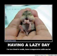 HAVING A LAZY DAY... - Tiny animal Meme Generator Posterizer via Relatably.com