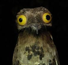 Weird Stuff I Do Potoo | Know Your Meme via Relatably.com