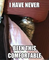 I HAVE NEVER BEEN THIS COMFORTABLE - Bed Cat - quickmeme via Relatably.com