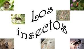 Resultado de imagen de LOS INSECTOS