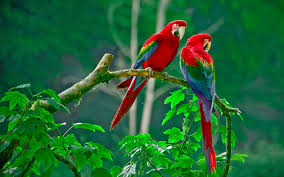 Image result for images of love birds