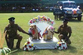 Γάμος αστυνομικών σκύλων...