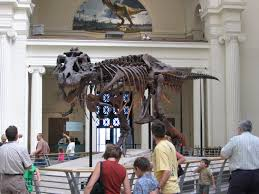10 reasons to a museum know your own bone 10 reasons to a museum