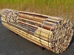 1000 images about bamboo ideas on pinterest bamboo bamboo furniture and bamboo crafts building bamboo furniture