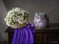 219 лучших изображений доски «Still <b>life with cats</b>»   Кошки ...
