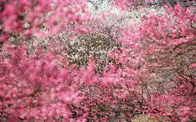 「sakura」の画像検索結果