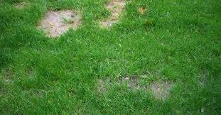 7 способов избавиться от <b>мха</b> на газоне | Дизайн участка ...
