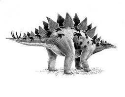 <b>Stegosaurus</b> | Natural History Museum