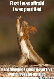 Emotional Squirrel by nayakha - Meme Center via Relatably.com