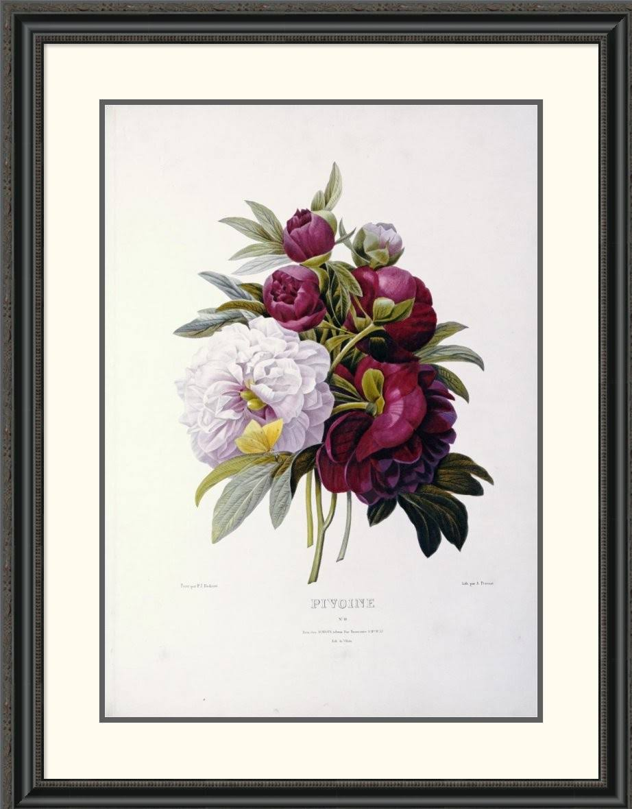 D Framed 19 Joseph Painting W Peonies 31 Global Print; Redoute Gallery H Pierre X 5 1 Von 40 wnHqxFACT