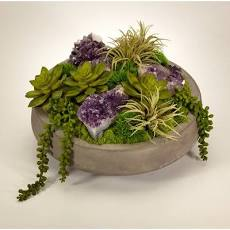 T&C Floral Company Succulents in Concrete Bowl